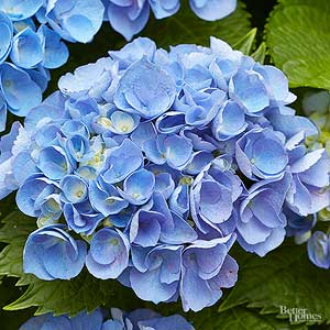 Unforgettable red and pink garden combos best blue flowers for your garden mightylinksfo Choice Image
