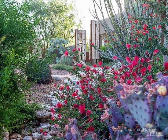 Best Fall Flowers For The Desert Southwest