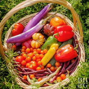 10 Vegetable Gardening Mistakes Even Good Gardeners Make