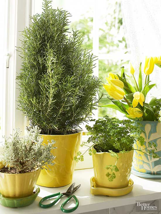How to grow herbs indoors when all you ve got is a sunny - Best herbs to grow indoors ...