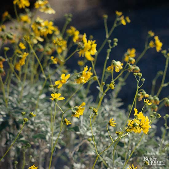 Best Early Spring Flowers for the Desert Southwest