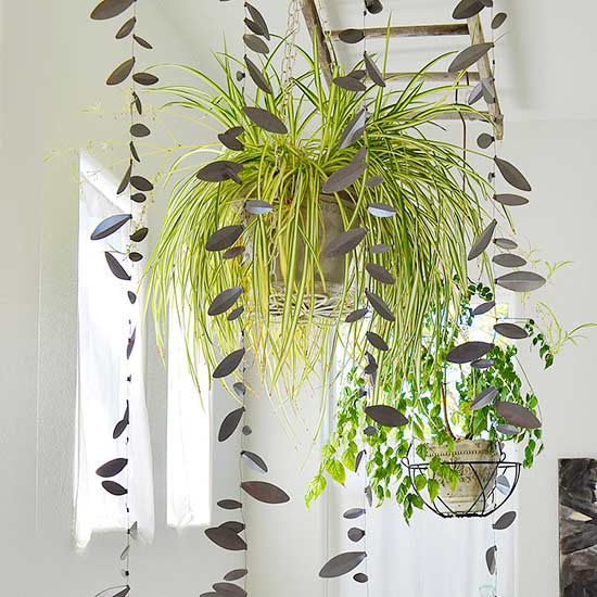 ingenious tropical foliage house plants. Spider Plant with a China Doll 11 Plants that Will Grow Better in Your Bathroom