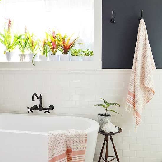 Why Grow Plants In The Bathroom
