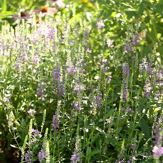 Uncommon Perennials the Test Garden Loves