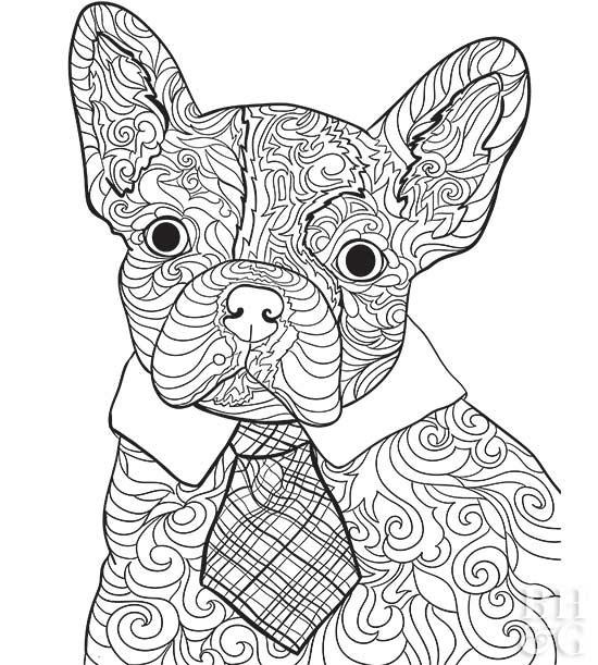 pet coloring pages