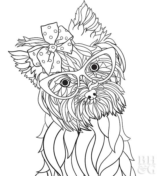 yorkshire terrier coloring pages - pet coloring pages