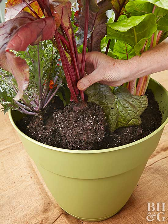 Plant your ve able container gardens the same time you would plant in the garden Depending on what types of ve able you want to grow you can start