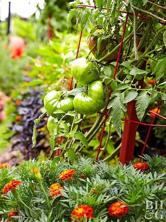 Youu0027ll Find That Some Vegetables Grow Better With Support. They Do Well On  Trellises, Fences, And Other Structures. By Growing Up Instead Of Out, ...