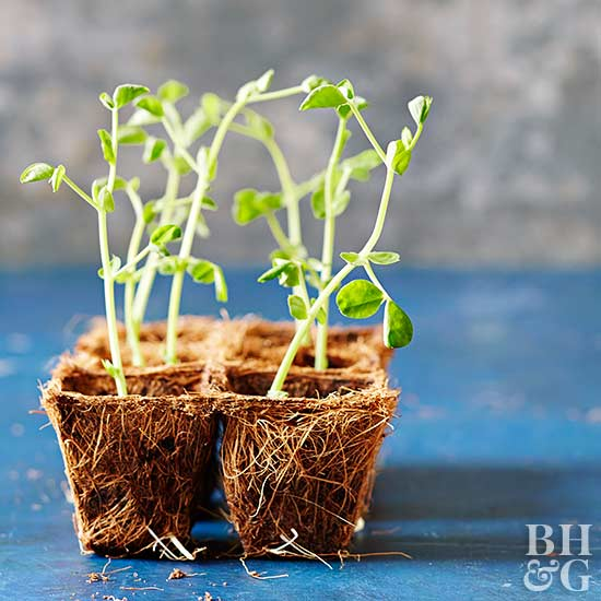 Herb care guide - Tips planting herbs lovage parsley dill ...