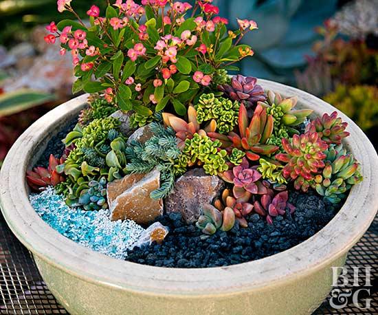 Mini Succulent Container Garden