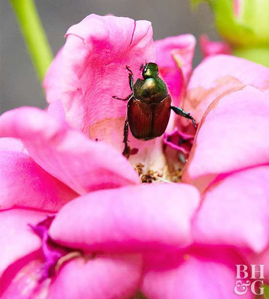 inspiration house plants that repel bugs. Keep Bugs at Bay Insect Repelling Plants  inspiration house The Best 100 Inspiration House That Repel Image