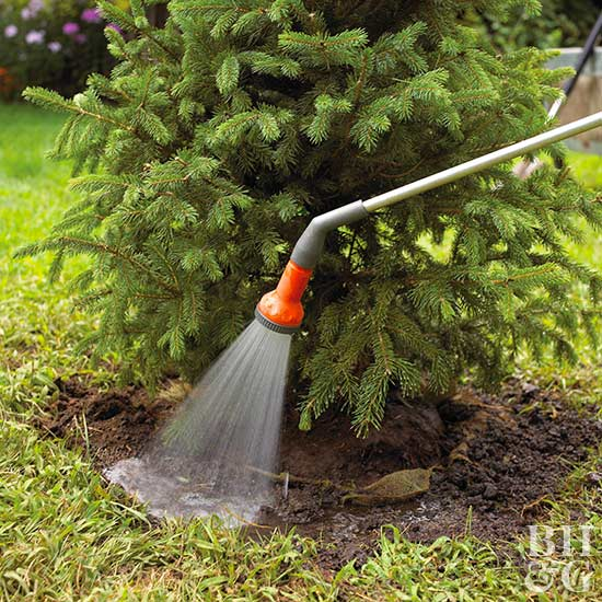 Country Pines Christmas Tree Farms: Grow Your Own Christmas Tree