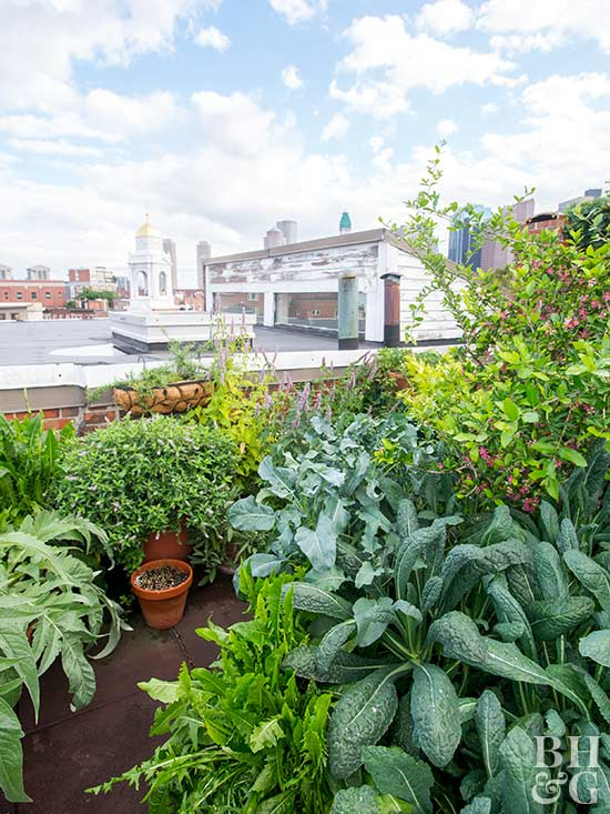 Rooftop Vegetable Garden Ideas Part - 45: You Donu0027t Need To Live On Acres Of Land To Have A Vegetable Garden  Anymoreu2014small City Apartments Can Have Their Own Beauitful Garden, Too!  Having A Rooftop ...