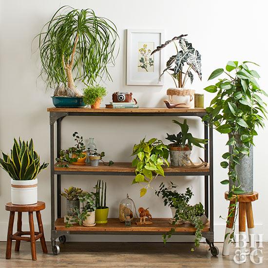 Decorating Dilemma House Plants: Year-Round Indoor Garden