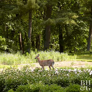 Tips For Keeping Deer Out Of Your Garden