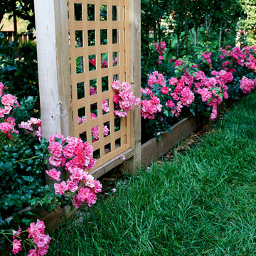 Groundcover rose rosa flower carpet pink blooms prolifically for five or more months the pink blooms with white centers develop in clusters 6 8 inches across mightylinksfo