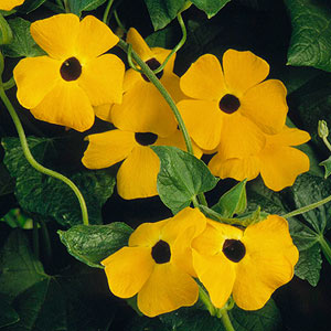 Vine yellow flowers image collections flower decoration ideas vine yellow flowers gallery flower decoration ideas vine yellow flowers choice image flower decoration ideas planting mightylinksfo Choice Image