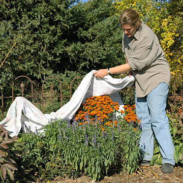 November Gardening Tips for the Desert Southwest