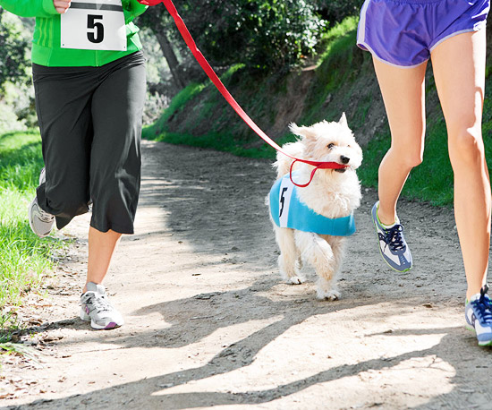 people jogging with dog